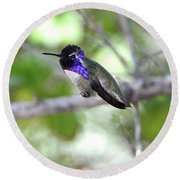 Costa's Hummingbird Round Beach Towel