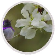 Costas Hummingbird On An Anacacho Orchid Branch Round Beach Towel