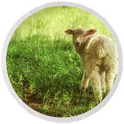 Cotswold Sheep Round Beach Towel