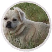 Cotton In The Grass Round Beach Towel