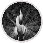 Round Beach Towel featuring the photograph Courtship Plumes by John F Tsumas