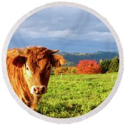 Cow And Autumn Colors  Round Beach Towel