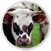 Cow Closeup Round Beach Towel