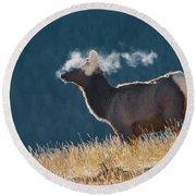 Cow Elk With Steamy Breath Round Beach Towel