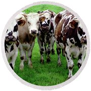 Cow Group Round Beach Towel