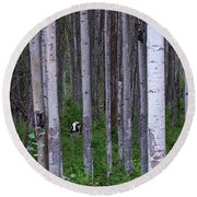 Cow In Aspen Trees Round Beach Towel