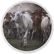 Cow On The Way Colored Round Beach Towel