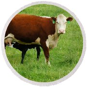 Cow With Calf Round Beach Towel