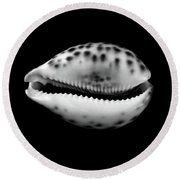 Cowry  Shell In Black And White Round Beach Towel by Jim Hughes