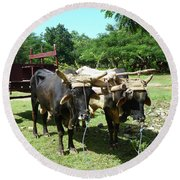 Cows And Cart Round Beach Towel