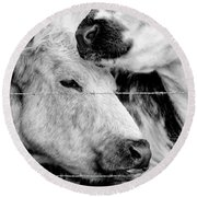 Round Beach Towel featuring the photograph Cows Behind Barbed Wire by Nick Biemans