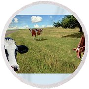 Cows In Field, Ver 4 Round Beach Towel
