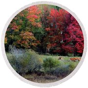 Cows In The Autumn Round Beach Towel