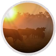 Cows In The Sunrise Mist Round Beach Towel