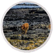 Cows On The Rocks Round Beach Towel