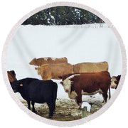Cows  Round Beach Towel by Victor K
