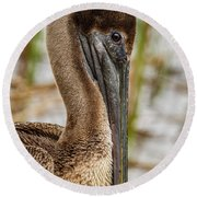 Round Beach Towel featuring the photograph Coy Pelican by Jean Noren