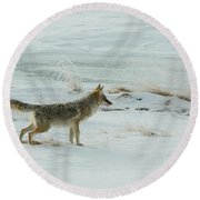 Coyote - 8962 Round Beach Towel