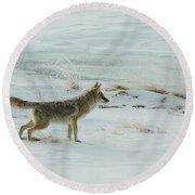 Coyote - 8962 Round Beach Towel