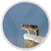Coyote At Overlook Round Beach Towel