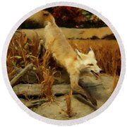 Round Beach Towel featuring the digital art Coyote  by Chris Flees