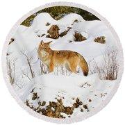 Coyote On Snowy Hill Round Beach Towel by Steve McKinzie