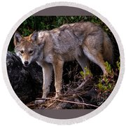 Coyote Portrait Round Beach Towel