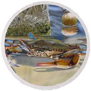 Crab On The Shoreline Round Beach Towel by Phyllis Beiser