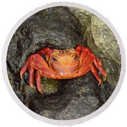 Crab Round Beach Towel by Will Burlingham