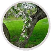 Crabapple Blossoms On A Rainy Spring Day Round Beach Towel by Byron Varvarigos