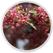 Crabapple In Spring Panoramic Round Beach Towel