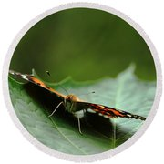Round Beach Towel featuring the photograph Cradled Painted Lady by Debbie Oppermann
