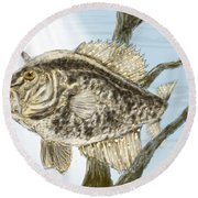 Crappie Time - 2 Round Beach Towel by Barry Jones
