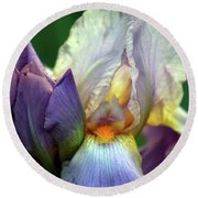 Cream And Purple Bearded Iris With Bud 0065 H_2 Round Beach Towel