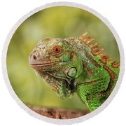 Creature On A Branch Round Beach Towel by Stephan Grixti
