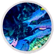 Round Beach Towel featuring the photograph Creole Wrasse And Little Spanish Hogfish by Perla Copernik
