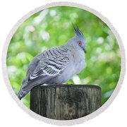 Round Beach Towel featuring the photograph Crested Beauty Edition 2 by Judy Kay