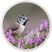 Crested Tit In Heather Round Beach Towel