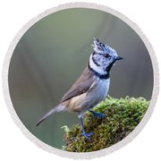 Crested Tit Round Beach Towel