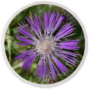 Cretan Thistle Round Beach Towel