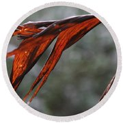Crimson Leaf In The Amazon Rainforest Round Beach Towel