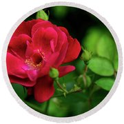 Round Beach Towel featuring the photograph Crimson Red Rose By Kaye Menner by Kaye Menner
