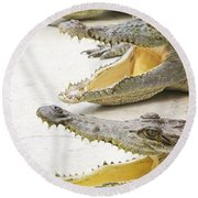 Crocodile Choir Round Beach Towel
