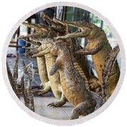 Crocodiles Rock  Round Beach Towel by Chuck Kuhn