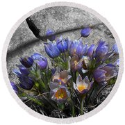 Crocus - Between A Rock And You Round Beach Towel by Stuart Turnbull