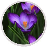 Crocus Vividus Round Beach Towel