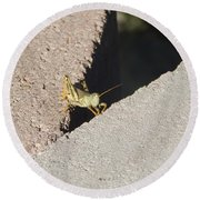 Cross Over Grasshopper Round Beach Towel