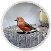 Crossbills Round Beach Towel