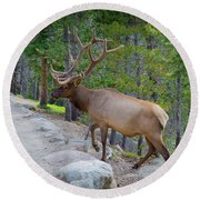 Crossing Paths With An Elk Round Beach Towel
