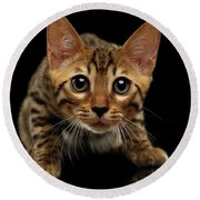 Crouching Bengal Kitty On Black  Round Beach Towel by Sergey Taran